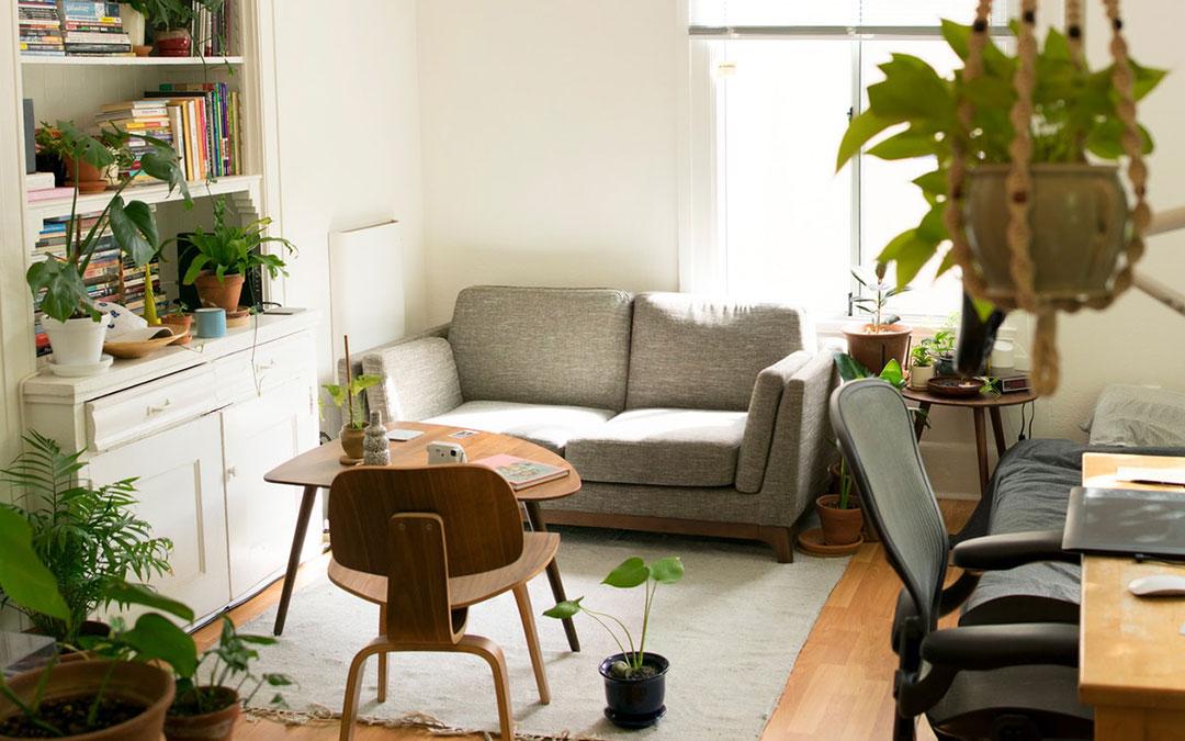 Rośliny, które pomogą oczyścić powietrze w domu